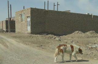 آمار بالای حیوان گزیدگی در خراسان شمالی